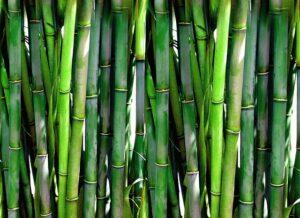 Bambuszkaro